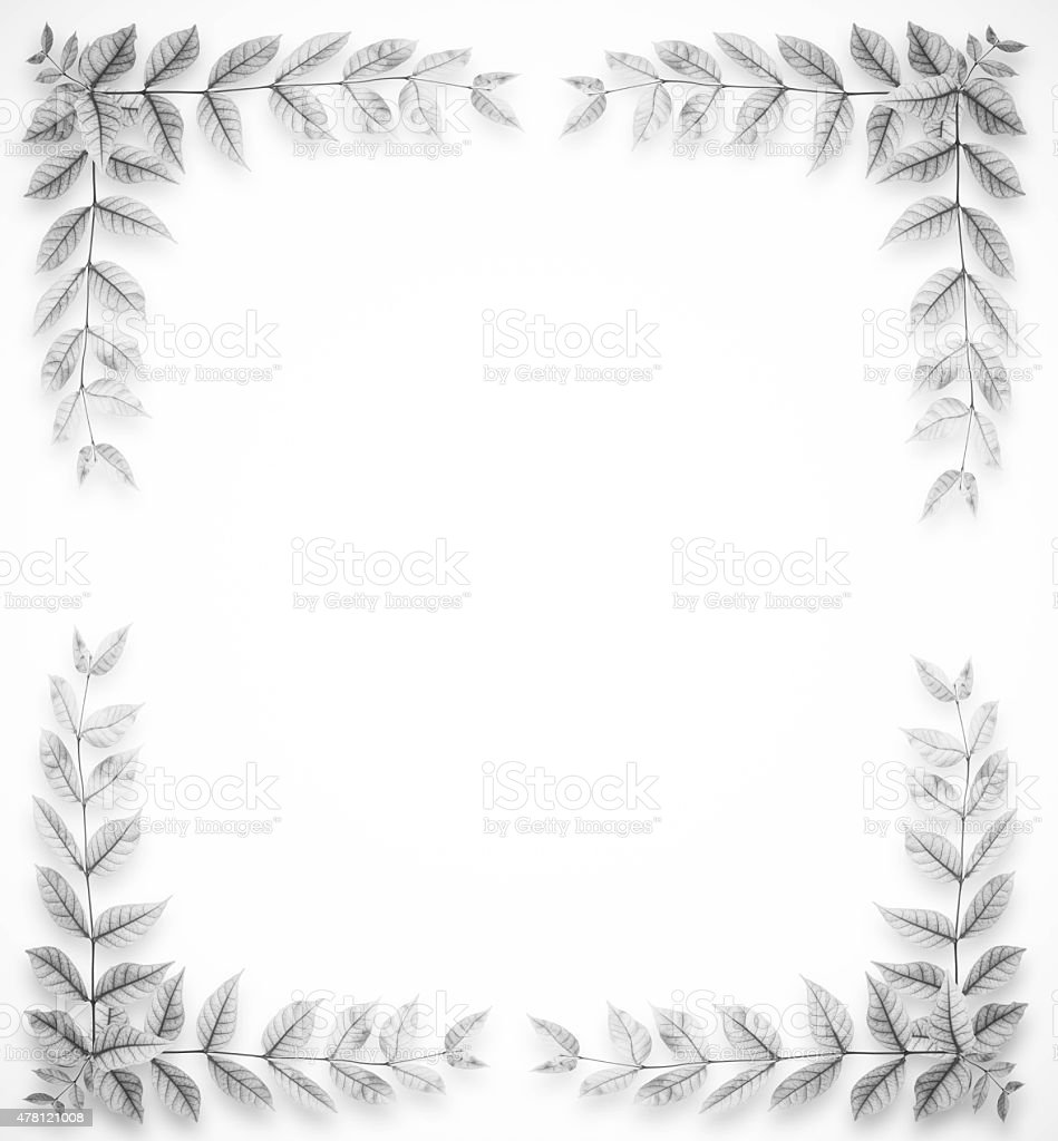 leaves frame Vertical black and white stock photo