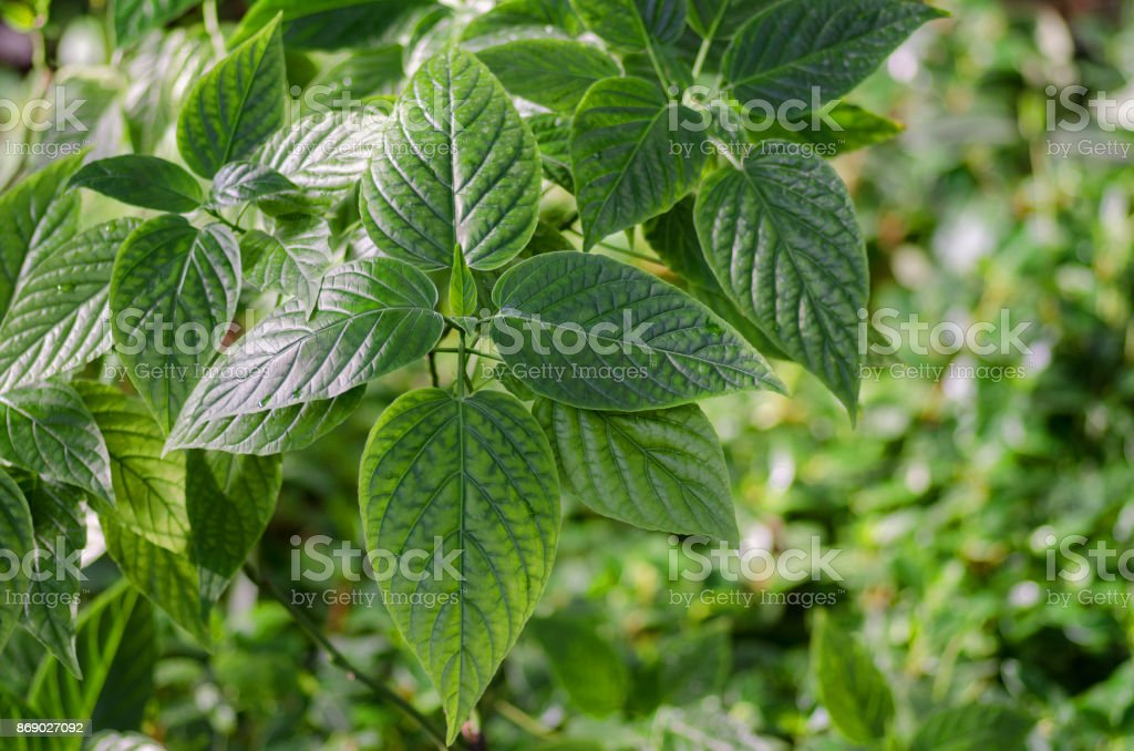 Leaves green background stock photo