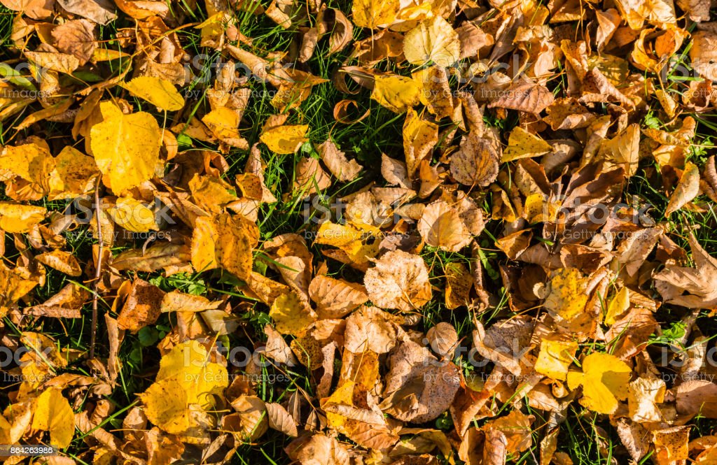 Leaves in autumn colors. royalty-free stock photo