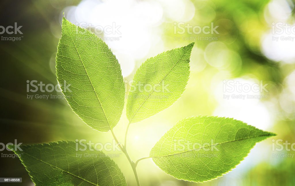 leaves in deep forest royalty-free stock photo