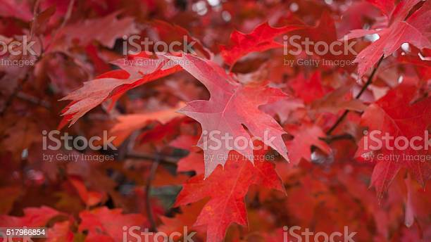 Photo of Leaves in Fall