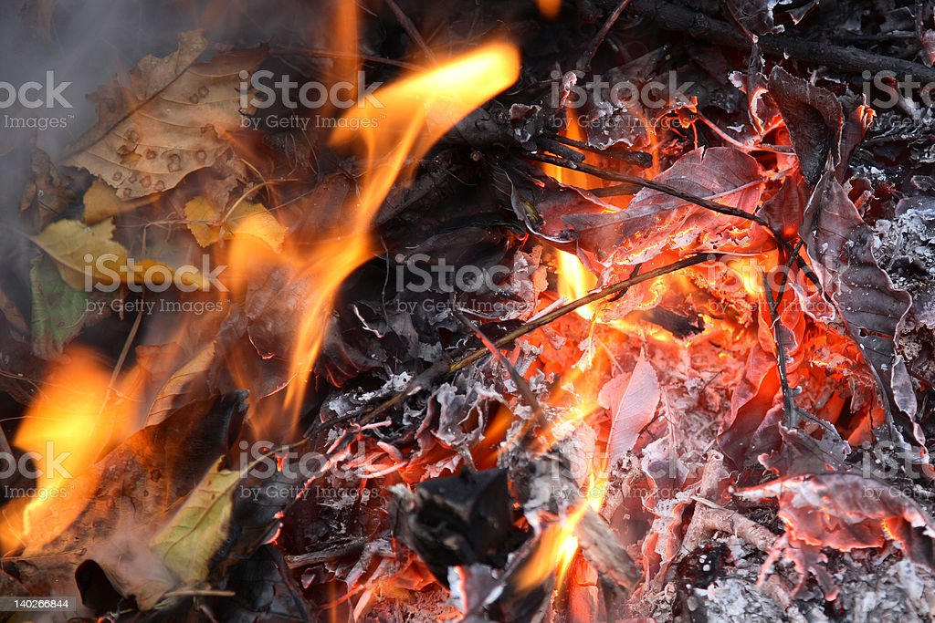 Leaves in flames royalty-free stock photo