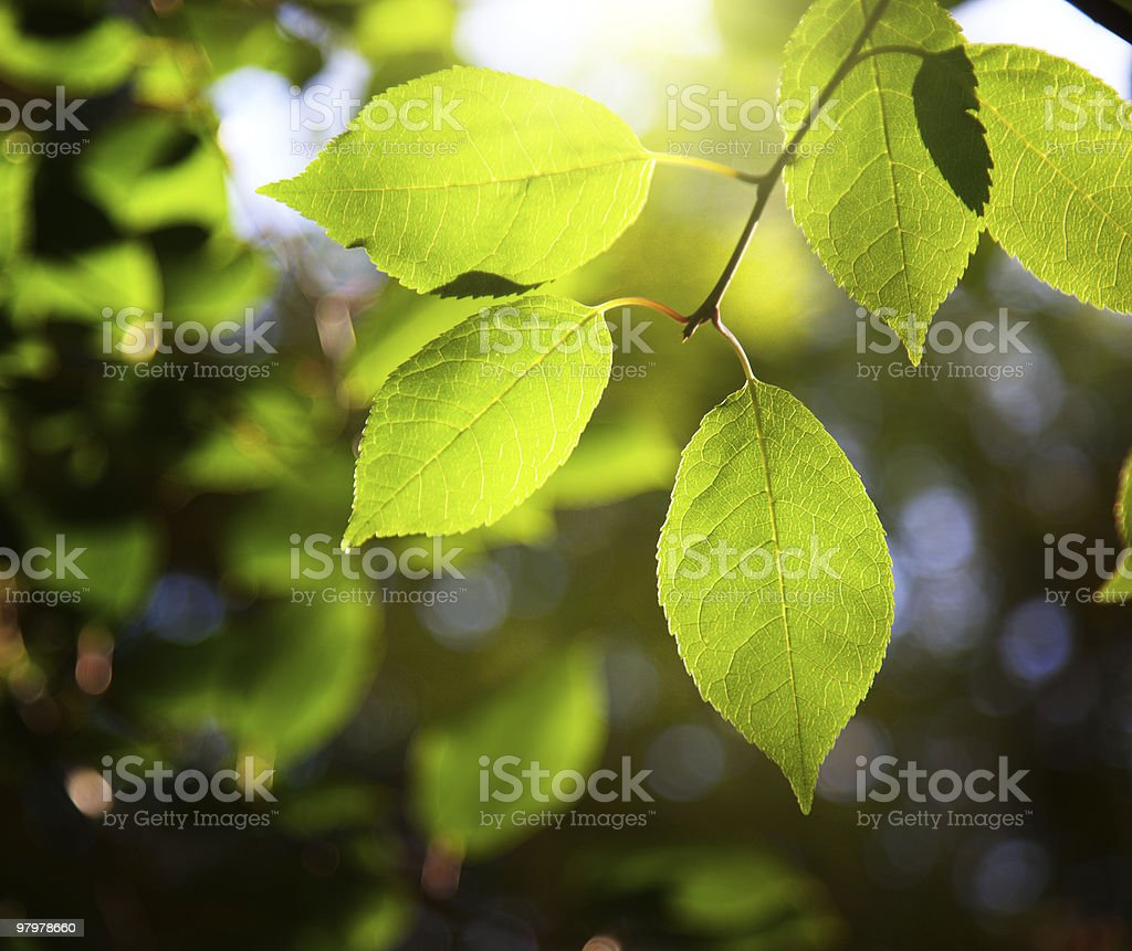 leaves in forest and sunset royalty-free stock photo