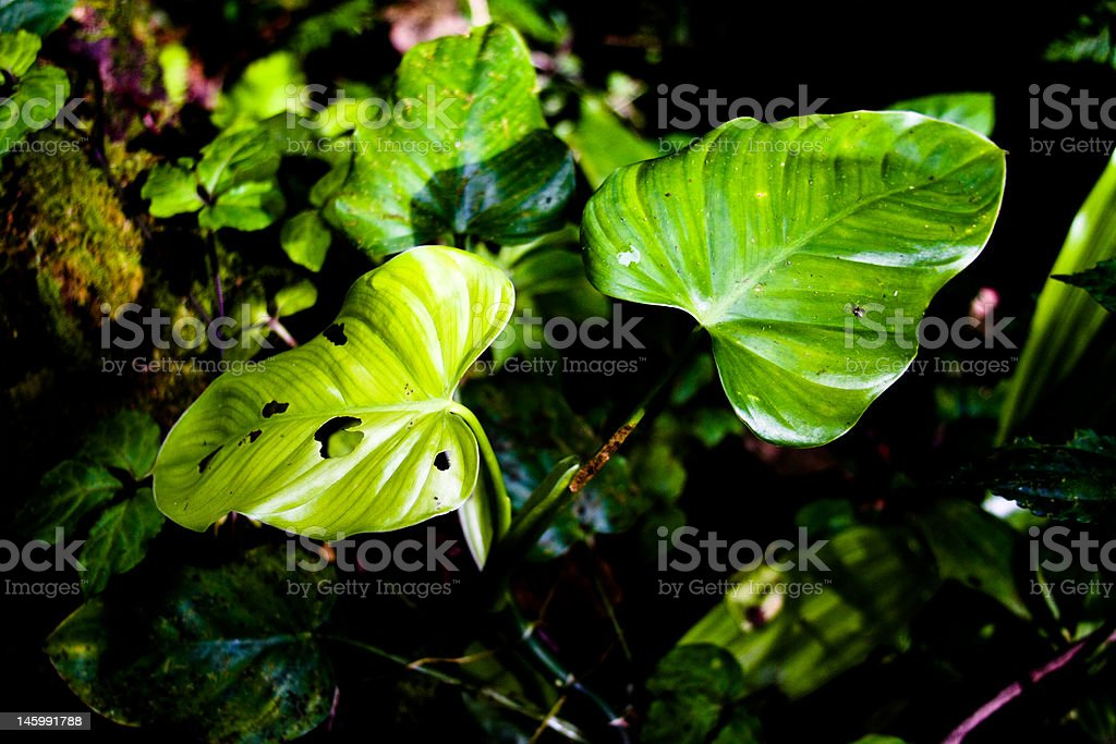 Leaves in forest royalty-free stock photo