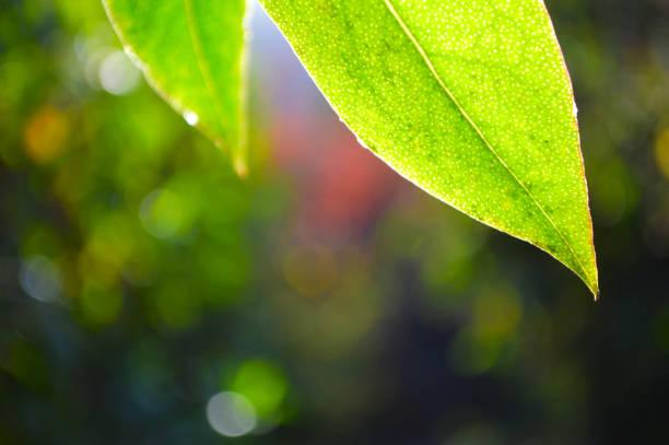 Leaves in full detail stock photo