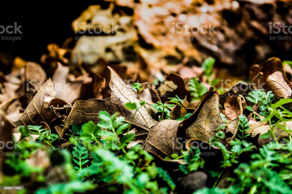 Leaves in Grass stock photo