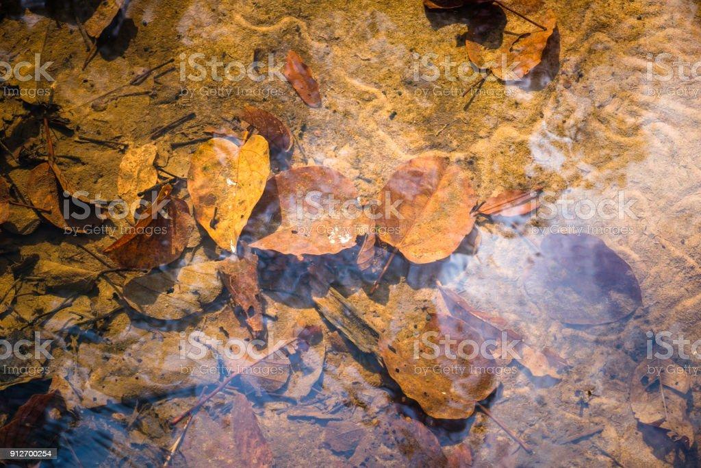 Leaves in Stream stock photo