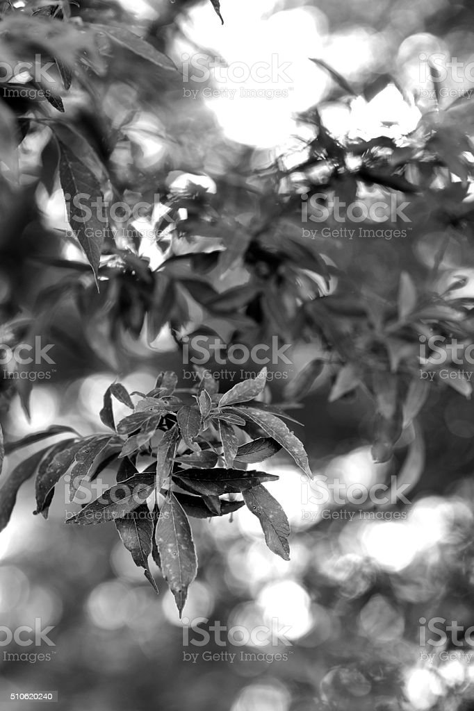 Leaves in summer stock photo