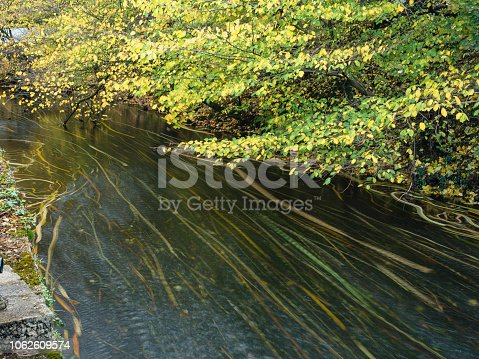 Long exposure of leaves on the tranquil autumn  River Wye in  Bakewell, Derbyshire