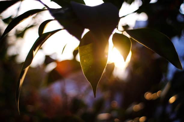 foglie al sole - foto stock