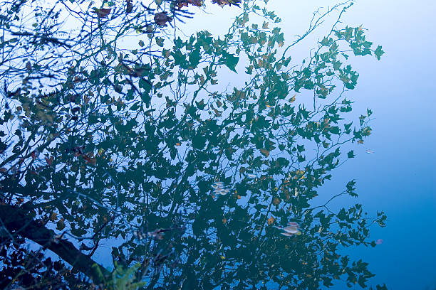 Leaves in the view of the lake stock photo