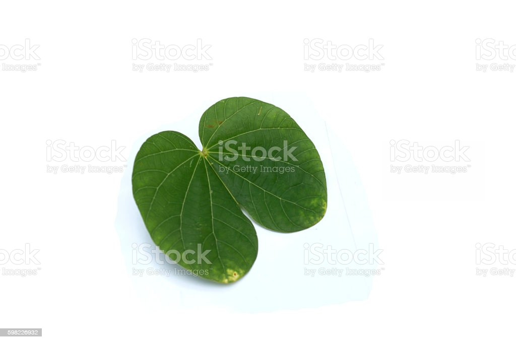 leaves in the white background. foto royalty-free