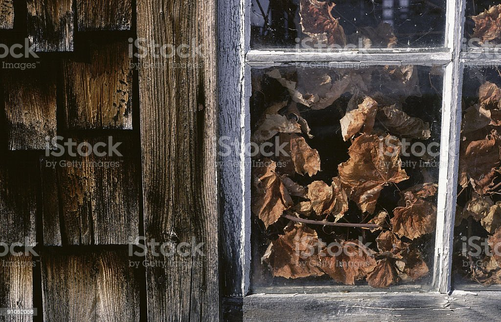 Leaves in the Window of an Old Barn royalty-free stock photo