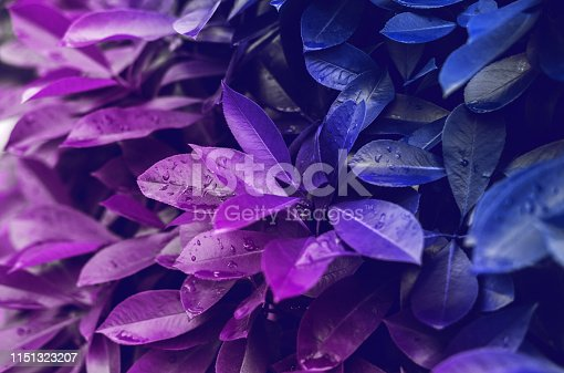 917861766istockphoto Leaves in vibrant bold gradient holographic neon colors. Concept art. Minimal surrealism background. 1151323207