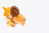 Bright and colorful autumn leaves on a white background.