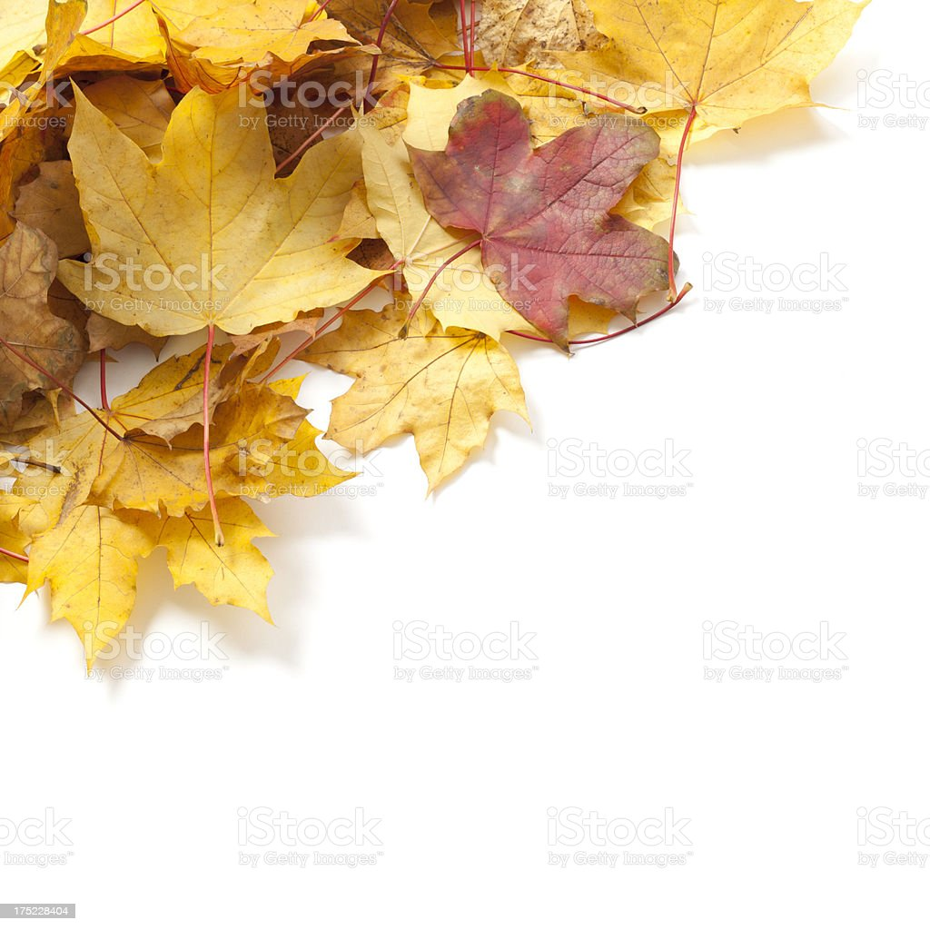 Leaves isolated on white royalty-free stock photo