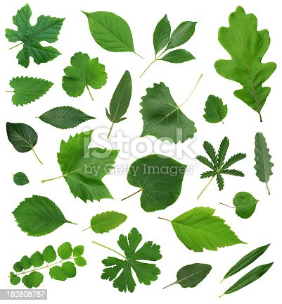 Over 30 super-high resolution beautiful leaves precision isolated on 255 white, with no shadow.  Tack sharp focus with no depth of field blur for easy and painless extraction.  Enjoy!