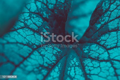 istock Leaves macro background 1011880608