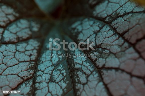 istock Leaves macro background 1085303482