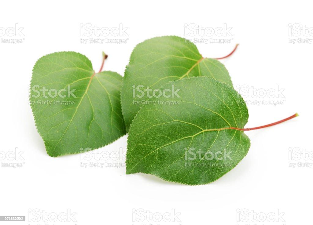 Kayısı izole üzerinde beyaz arka plan yaprakları royalty-free stock photo