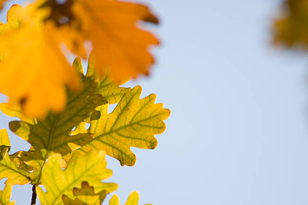 Leaves of Autumn stock photo