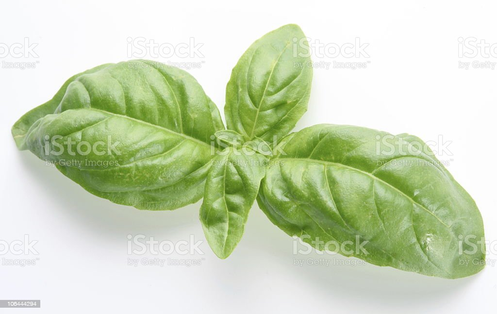 Leaves of basil royalty-free stock photo