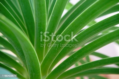 Leaves, Nutrient, Botanical Garden, Desert, Flowering Plant, Ornamental Garden