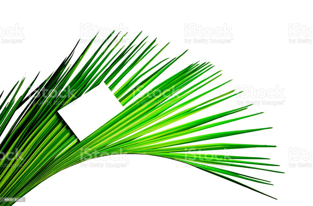 Leaves of coconut royalty-free stock photo