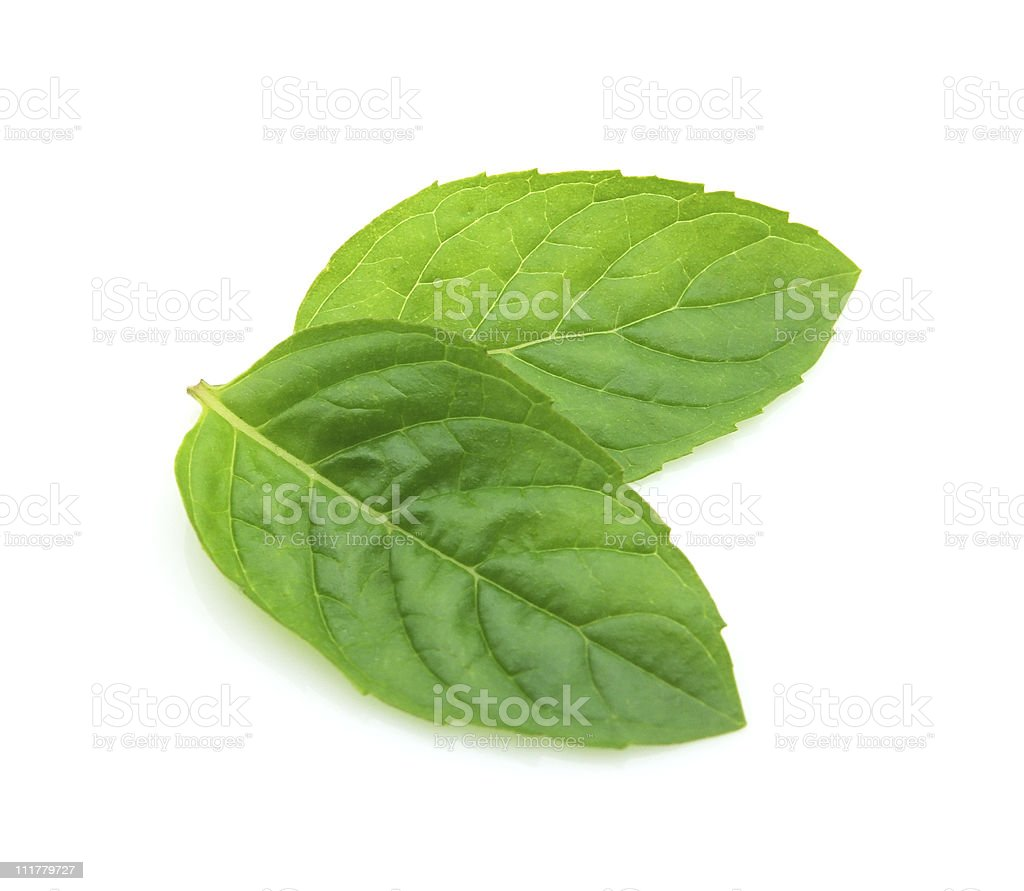 Leaves of mint stock photo