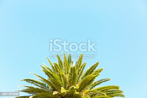Closeup top part of palm tree against blue sky, nature background, full frame horizontal composition with copy space