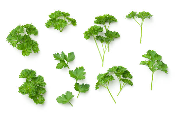 Leaves of Parsley Isolated on White Background stock photo