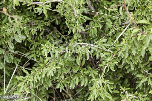1146115746istockphoto Leaves of plants 685771326