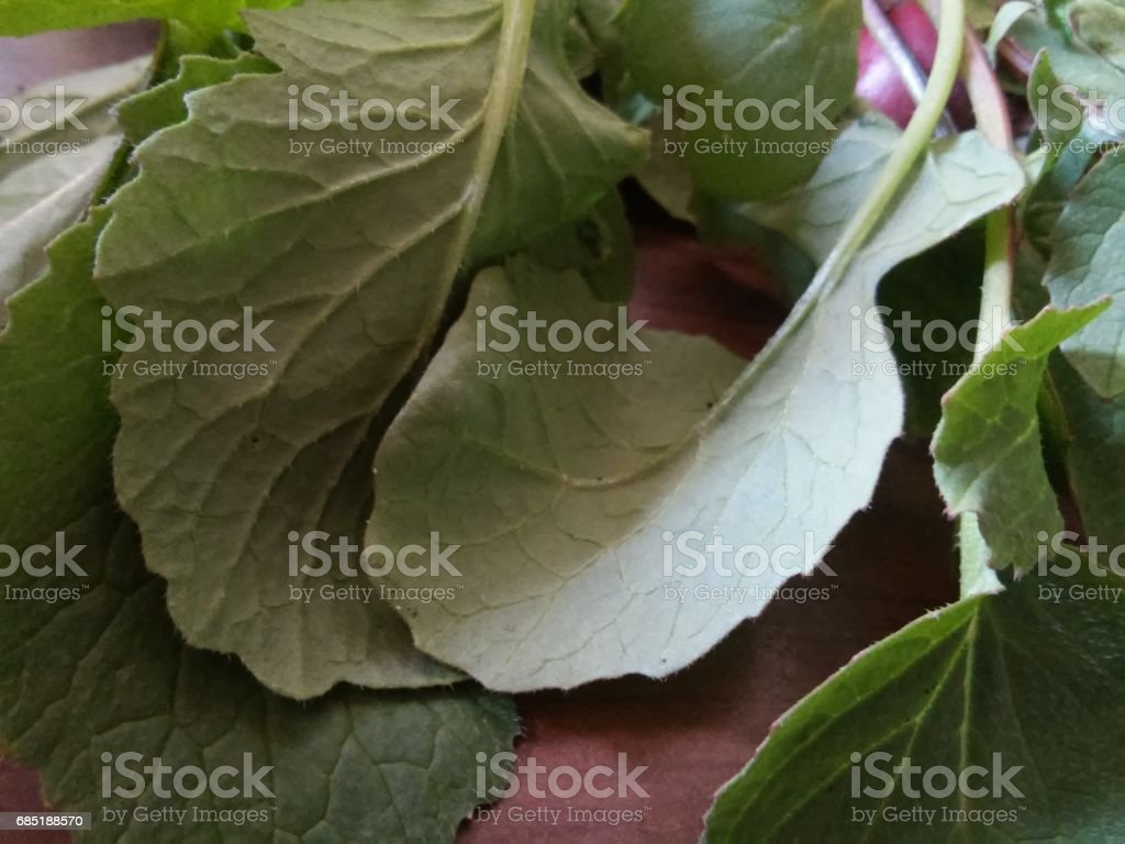 Leaves  of radishes royalty-free stock photo