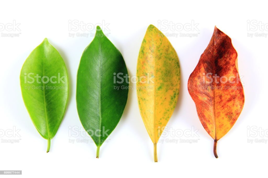 Leaves of the four seasons stock photo