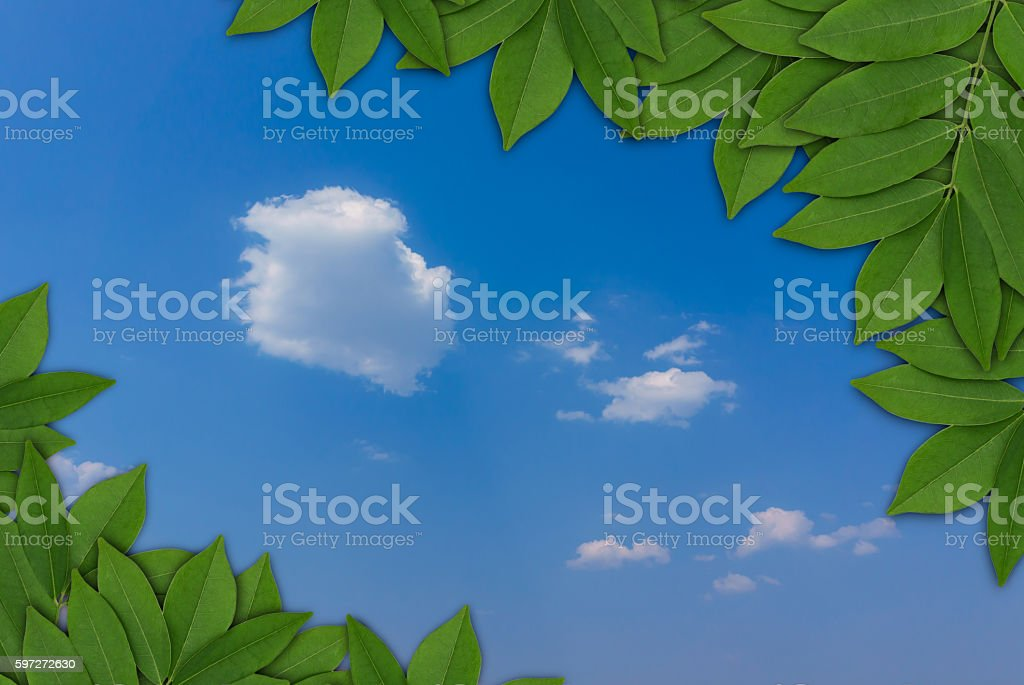 Leaves on blue sky background, Leaves frame photo libre de droits