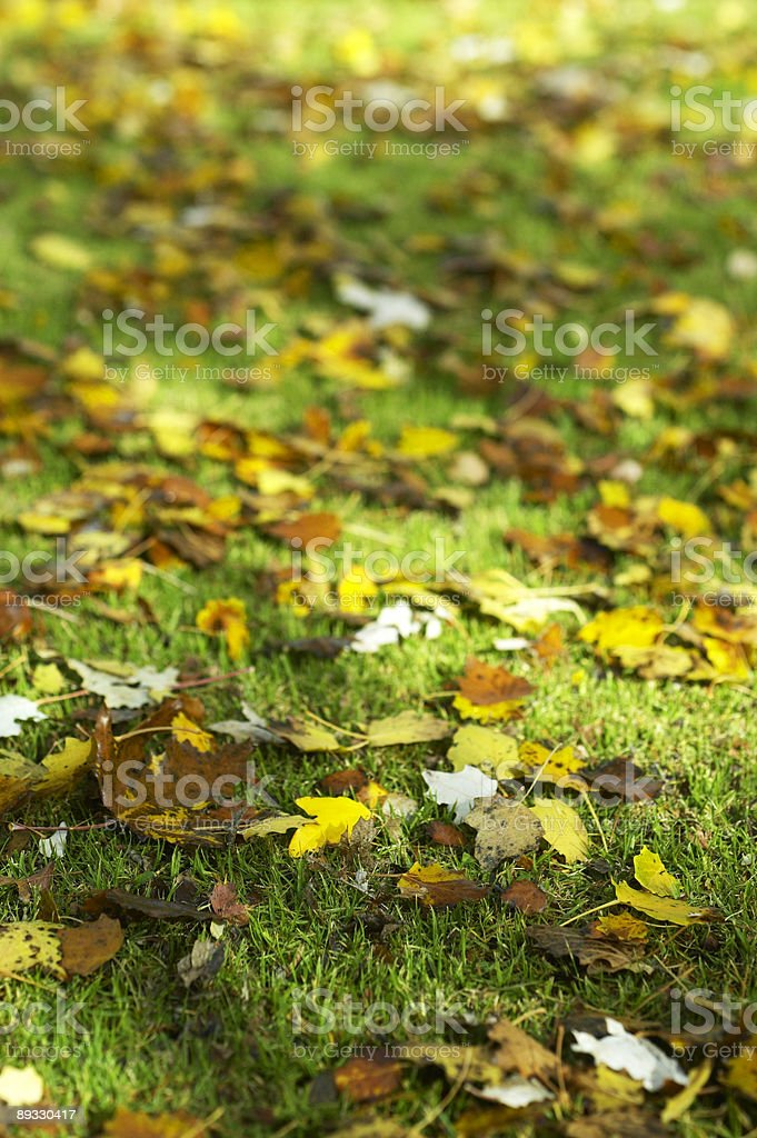 Leaves on grass royalty-free stock photo