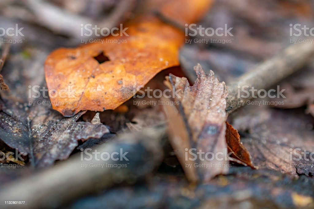 leaves on ground in nature stock photo
