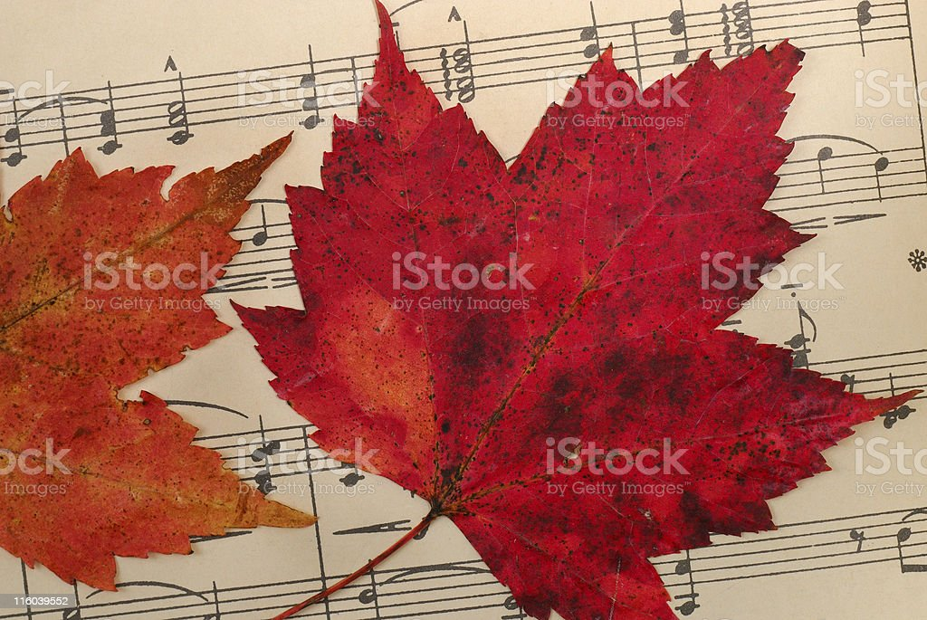 Leaves on Music royalty-free stock photo