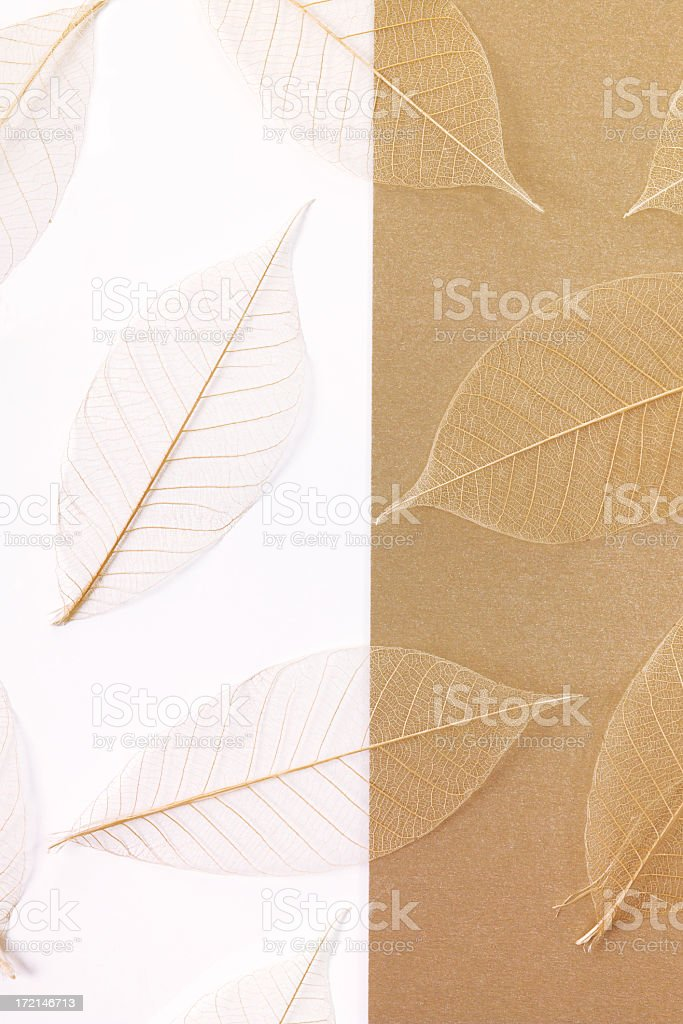 leaves on paper stock photo