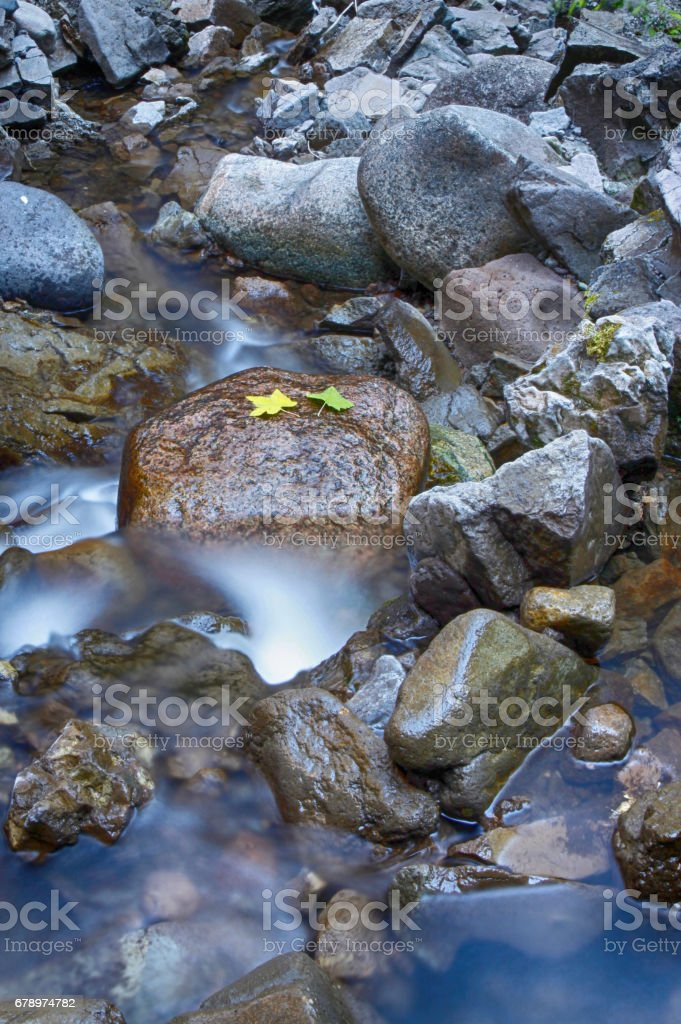 Leaves on rock in Tower Creek, Yellowstone, USA photo libre de droits