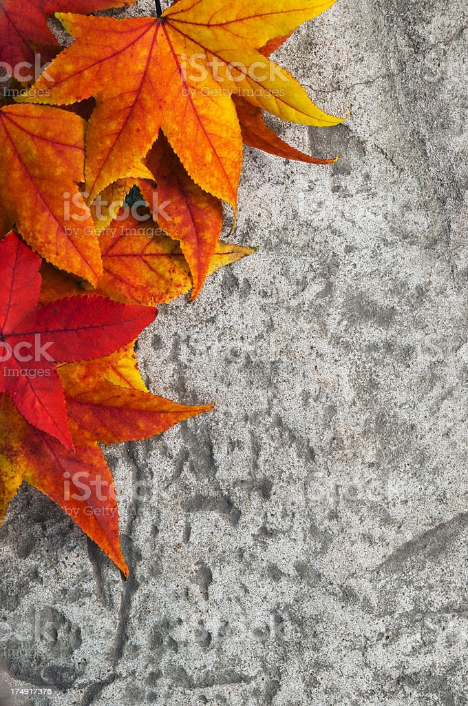 Leaves on stone royalty-free stock photo