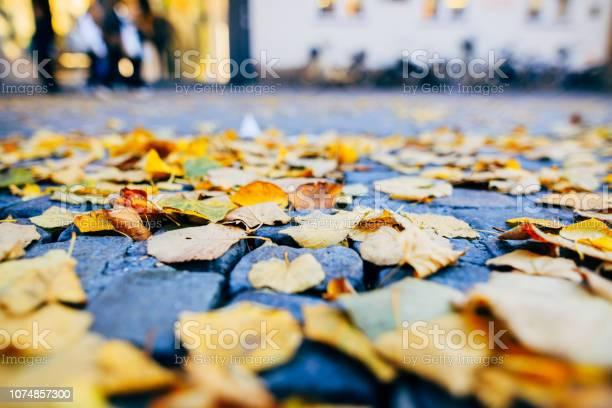 Photo of Leaves on street that people walking on
