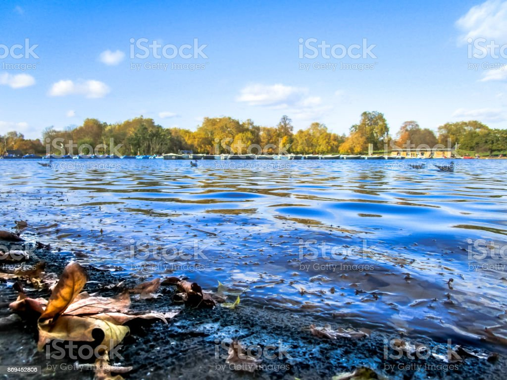 Leaves on the banks of the Serpentine stock photo