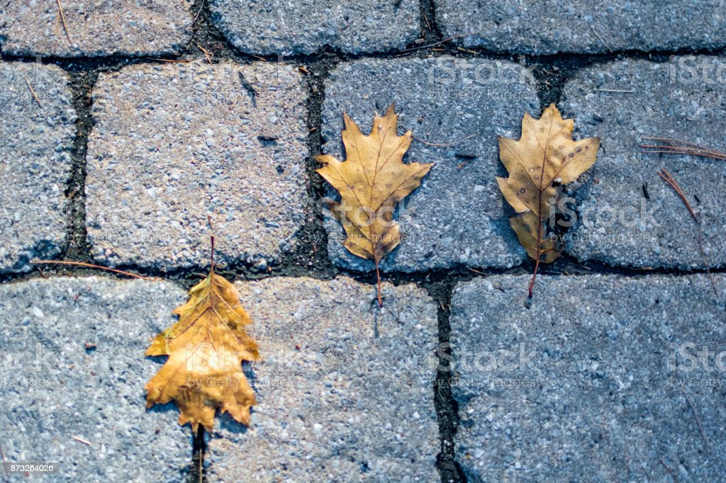 Leaves on the ground stock photo