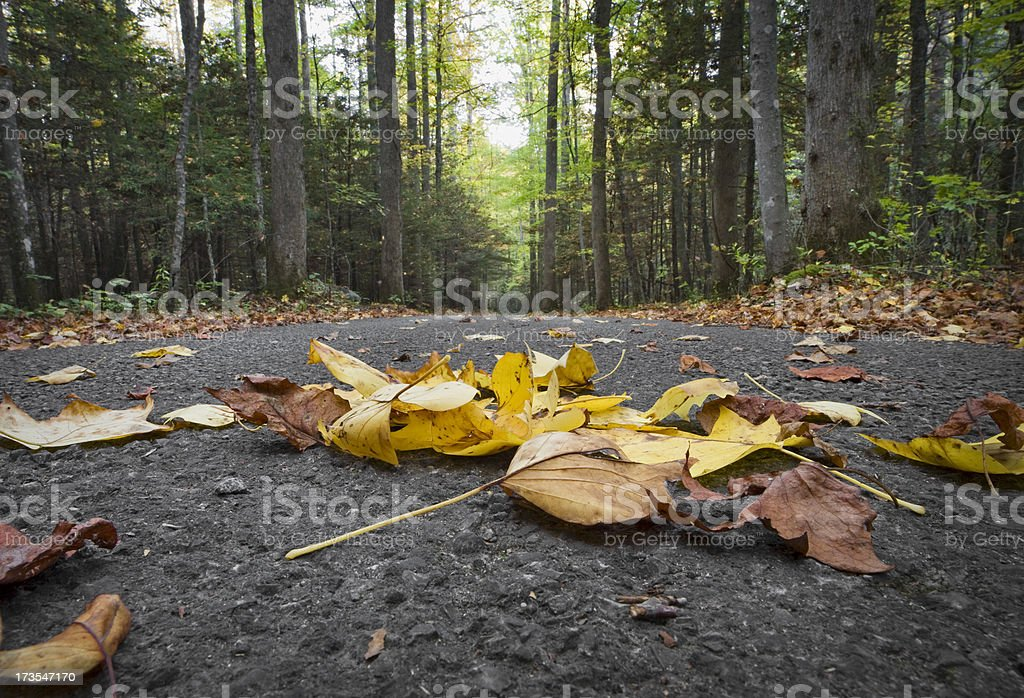 Leaves on the Road royalty-free stock photo