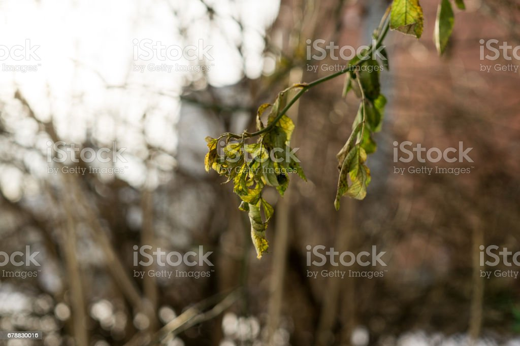 Leaves on the tree. royalty-free stock photo