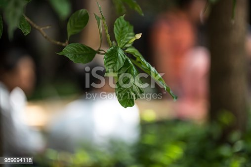 Close up image of leaves on the tree.