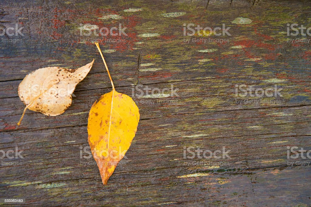 Leaves on Wood Plank stock photo