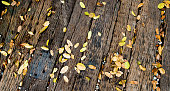 Leaves on wooden deck background.