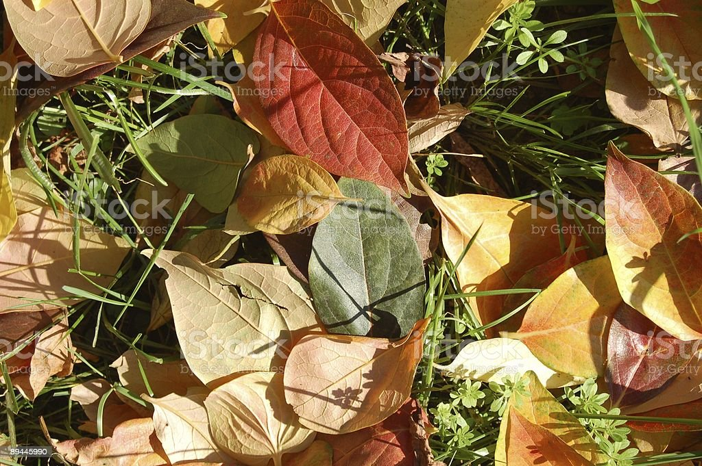 Leaves path royalty-free stock photo